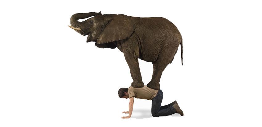 ElephantonBack