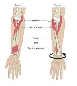 Forearm Rotation Contributes to Elbow Pain