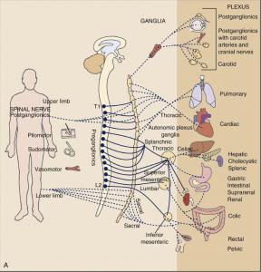 visceral-nerves